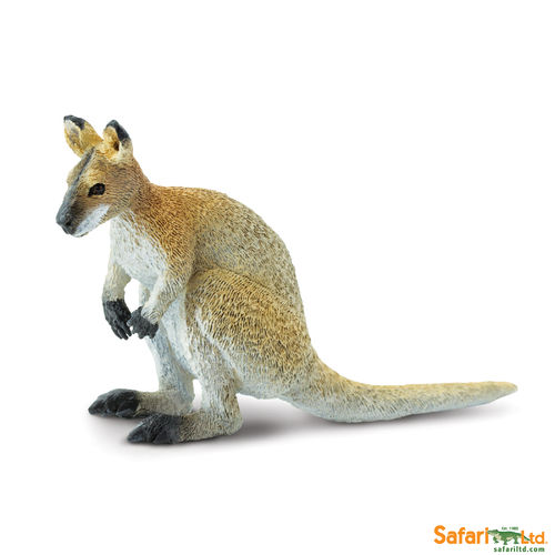 S224929 Wallaby