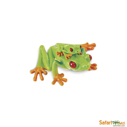 S100120 Red-Eyed Tree Frog
