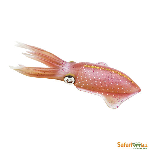 S266229 Reef Squid