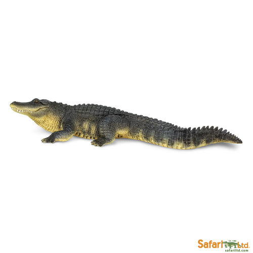 S113389 Wunder der Wildnis - Alligator
