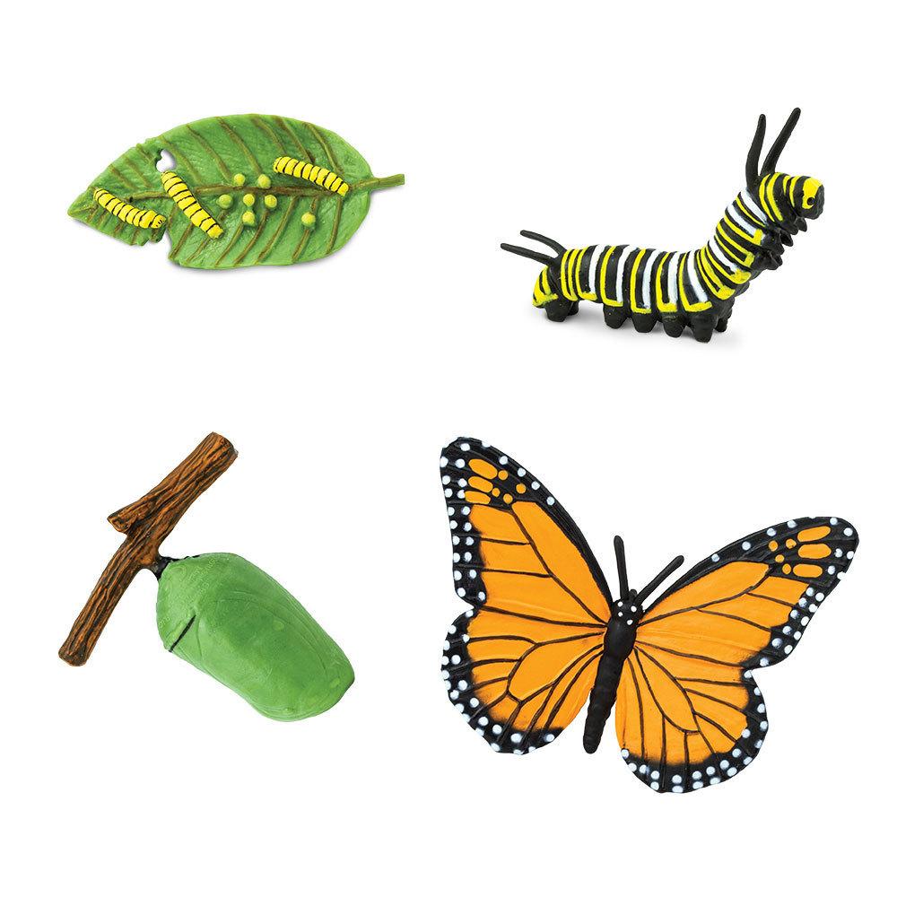 Dorable Ciclo De Vida De La Mariposa Para Colorear Inspiración ...