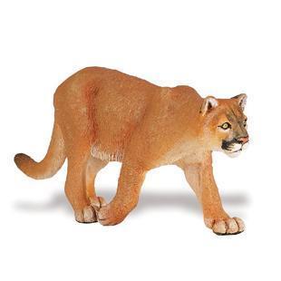 S291829 Puma concolor