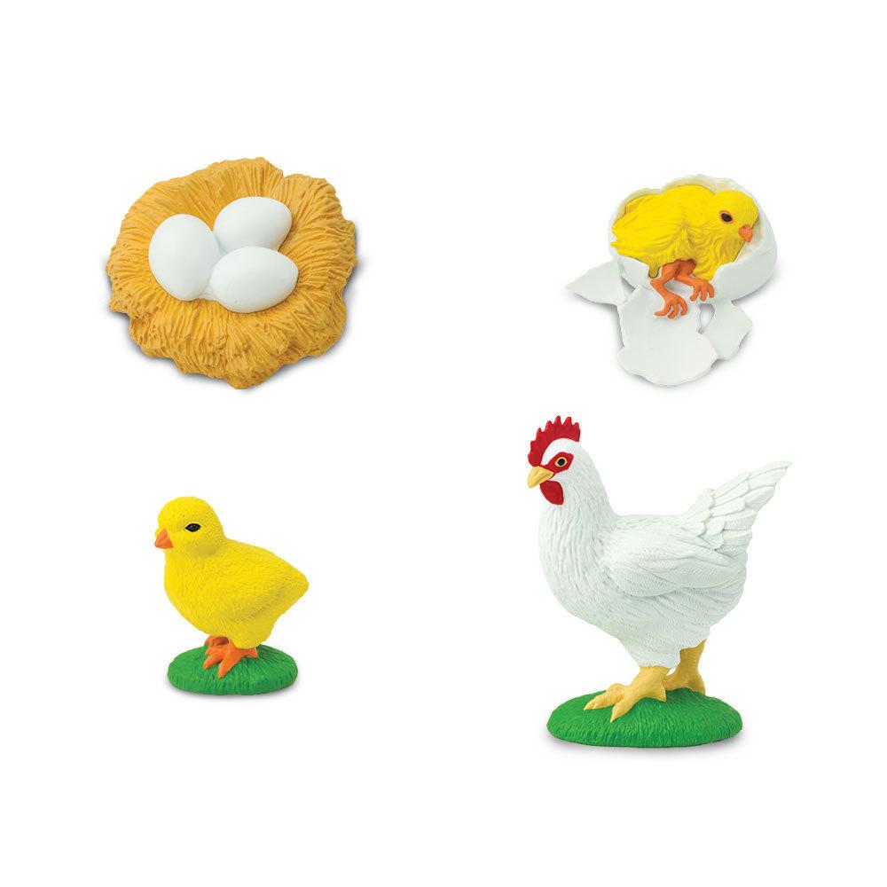S662816 Safari Science - Life Cycle of a Chicken - AXSE ...
