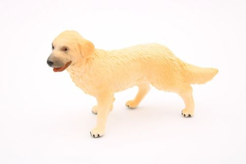 BUL65382 - Golden Retriever