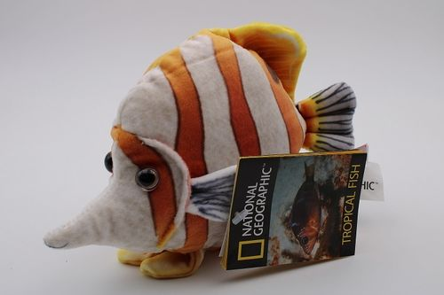 NA770792-A - Copperband Butterflyfish