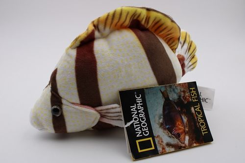 NA770792-D - Marley´s Butterflyfish